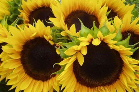 Oecumenische viering Nationale Ziekendag Honselersdijk